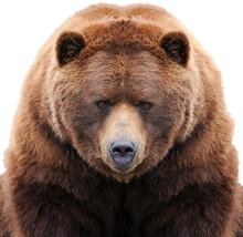 Primo Piano Di Un Orso