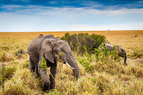 It's African elephant and its little baby in Kenya, Africa Canvas