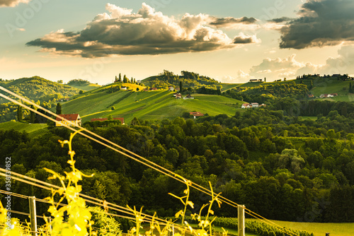 Leinwand Poster Beautiful landscape of Austrian vineyards in south Styria