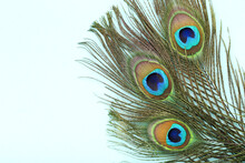 Peacock Feathers On Blue Background