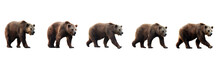 Set Of Brown Bears Isolated On...