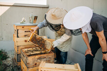 Beekeeping In The City On The ...