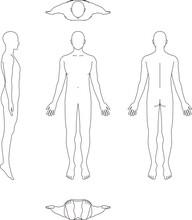 人体のイラスト。男性...