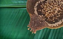 Honeycomb On A Banana Leaf