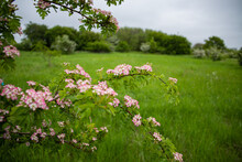 Pink And White Flowers On A Twitch With Green Field In The Background