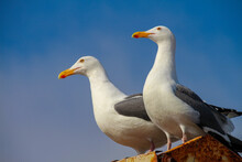 Two Seagulls Are Standing On A...