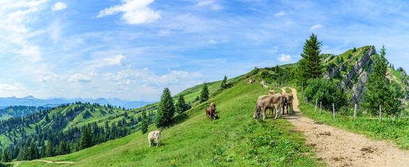 Kühe auf einer Bergweide genießen die herrliche Allgäuer Berg