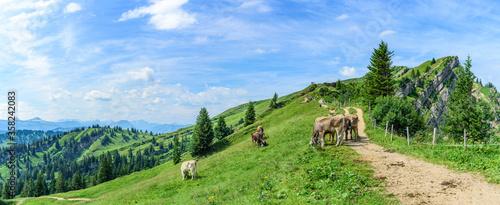 Obraz Kühe auf einer Bergweide genießen die herrliche Allgäuer Berg - fototapety do salonu