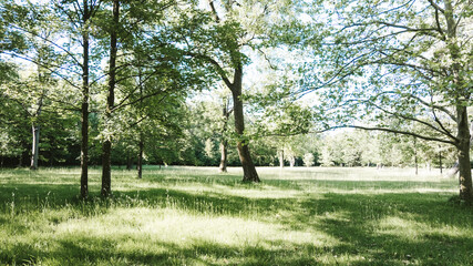 Sunny meadows with deciduous trees