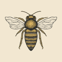 Hand Drawing Vintage Bee Vecto...