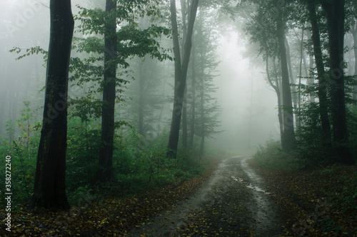 Photo road in forest on rainy day with fog