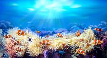 Clownfish Swimming Among Sea A...