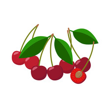 Cherries Vector Illustration I...