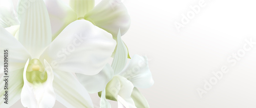 Valokuvatapetti Gift certificate, Voucher with realistic white orchid flower bouquet