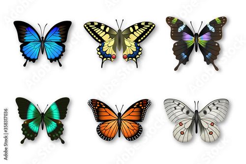 Fotografia set of colorful butterflies
