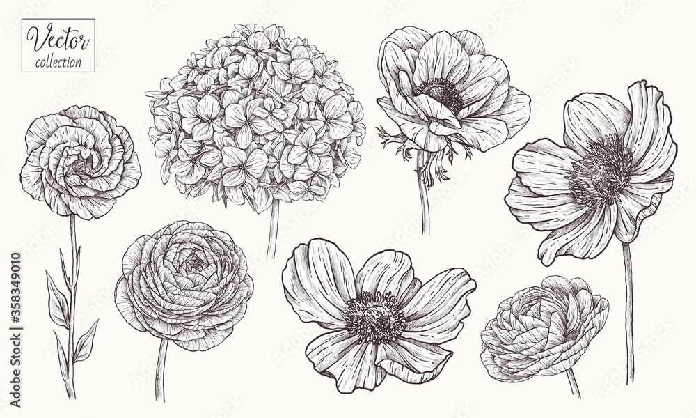Fototapeta Hydrangea, anemone, ranunculus, eustoma, japanese anemone. Vector collection of hand drawn flowers. Vintage Botanical Flowers.
