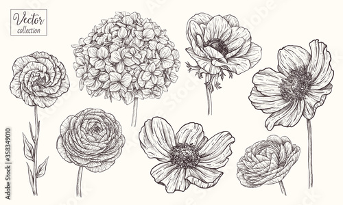 Fototapeta Hydrangea, anemone, ranunculus, eustoma, japanese anemone. Vector collection of hand drawn flowers. Vintage Botanical Flowers. obraz