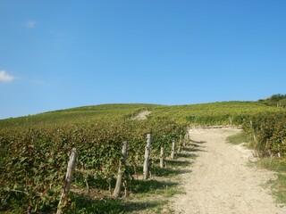 Fototapeta na wymiar Hills of the lower Langa near Castiglion Tinella, Piedmont - Italy