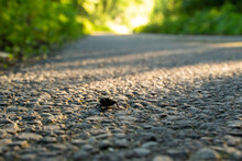 Small Beetle Crossing Countrys...