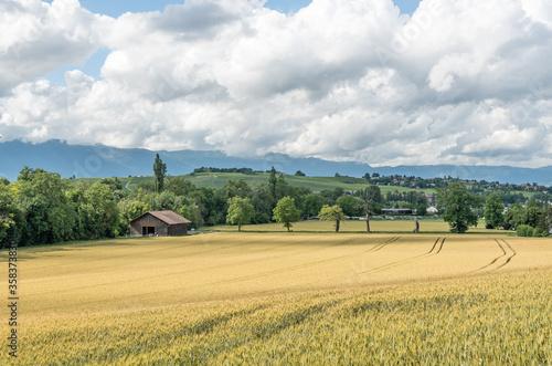 Fototapeta Paysage rural en Suisse
