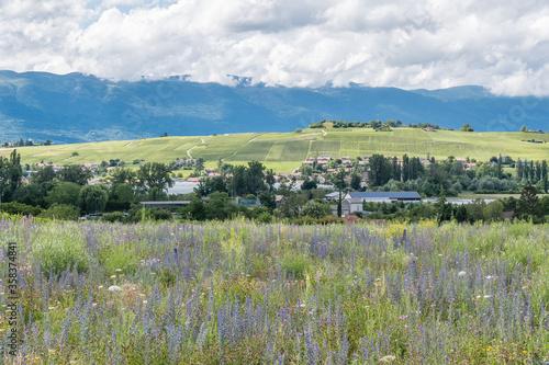 Fotografie, Obraz Champ fleuri à Perly en Suisse