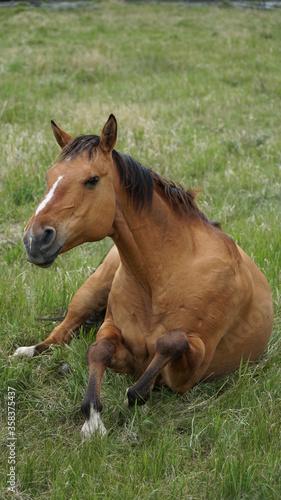 horse sitting up