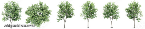 Set or collection of green maple trees isolated on white background. Concept or conceptual 3d illustration for nature, ecology and conservation, strength and endurance, force and life