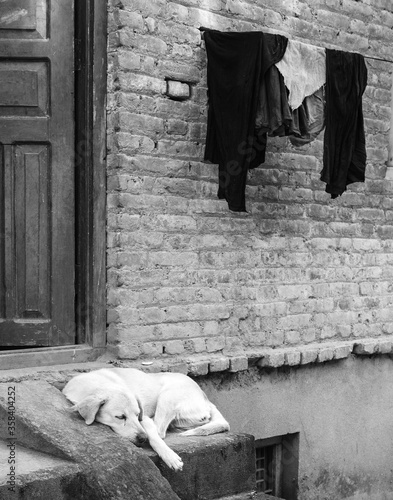 Black and white photo of yellow lab dog sleeping on a porch.