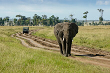 A Stubborn Bull Elephant Blocks Safari Vehicles On A Rutted Dirt Track Near Governors' Camp In The Masai Mara Game Reserve, Kenya