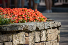 Flowers In A Stone Box