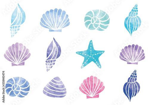 Fotomural 色んな種類の貝殻_水彩