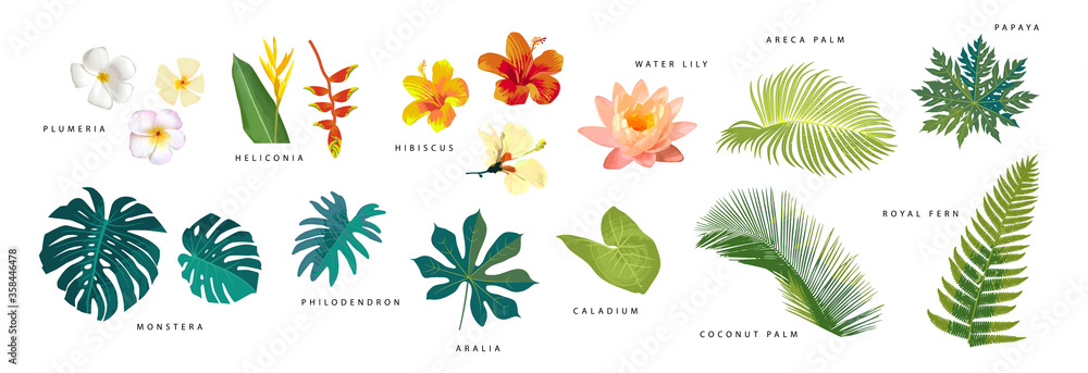 Fototapeta Set of vector realistic tropical leaves and flowers with names isolated on white background. Artistic botanical illustration
