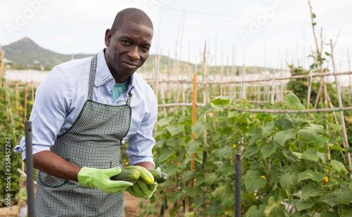 Foto Young man gardener picking harvest of fresh cucumbers
