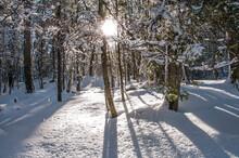 Prima Neve