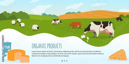 Valokuvatapetti Cows in farm vector illustration