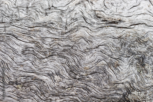 Photo Texture of dead dried wood near the lake