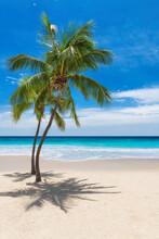Sunny Tropical Beach With Coco...