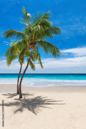 Sunny tropical beach with coco palms and the turquoise sea on Caribbean island.