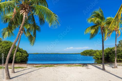 Obraz Beautiful tropical beach with palm trees and turquoise sea in Caribbean island. - fototapety do salonu