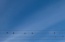 Swallows Sit On Wires Against ...