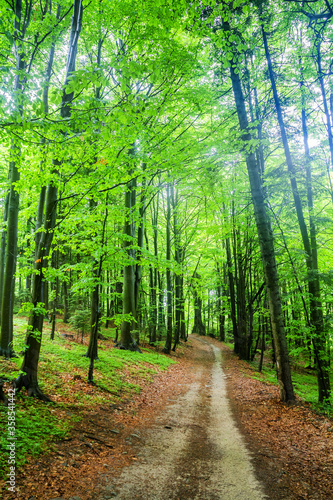 Spring beech forest in the mountains of the southern Poland.