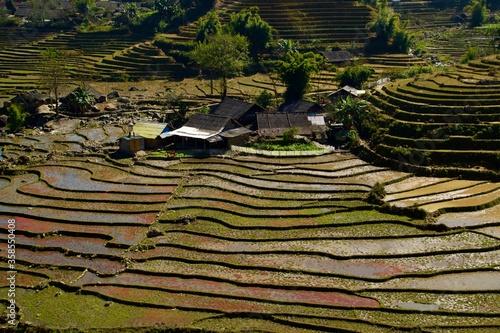 Photo Campos de arroz en Vietnam