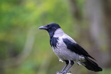 A Black Crow Sitting On A Pole