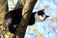 Mój Kot Na Drzewie