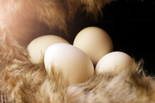 White Eggs, Natural Food So Cl...