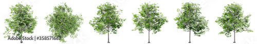 Photo Set or collection of green oak trees isolated on white background