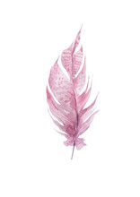 Hand Drawn Watercolor Pink Fea...