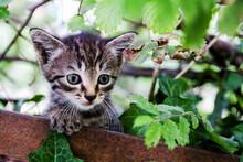 Little Kitten Under A Tree
