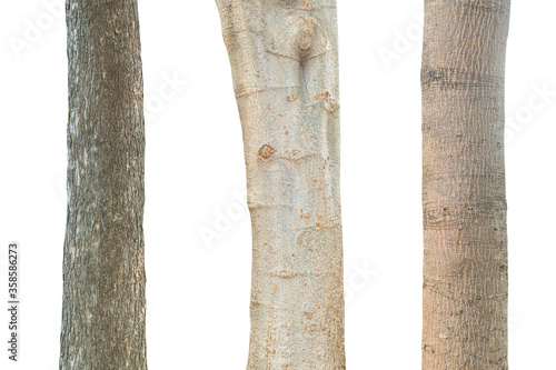 Fotografie, Obraz Tree trunk isolated on white background. This has clipping path.