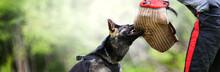 Dog Training On The Playground...
